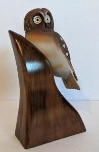 Saw Whet Owl by Al Bonar