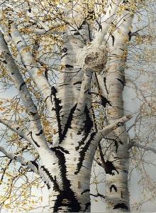 Paperwasp Nest by Conrad Mieschke