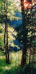 Forest Light by Cyril Cox
