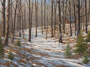 Maple Woods by Jake Vandenbrink