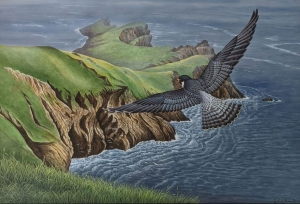 Peregrine Falcon by Neil Blackwell