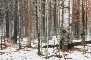 Winter Rain I by Peter Rotter
